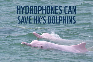 HYDROPHONES CAN SAVE HK'S DOLPHINS  © WWF-Hong Kong