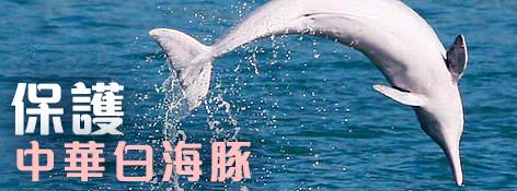 保護中華白海豚 / ©: WWF-Hong Kong